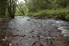 River running through the forest. Woodlands, or woods. This is Glenbower Wood in Ireland Stock Photography