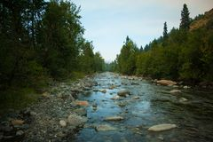 Riverway. River running through forested countryside Stock Photography