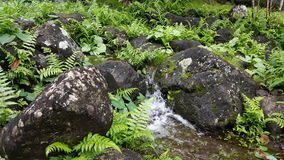 River running through iao valley. Plants growing through the rocks Stock Photo