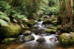 River Running over Mossy Rocks. The Toorongo River, Victoria, Australia, flows over moss-covered rocks stock photo