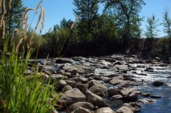 Rocks in country creek. A trickle of shallow water flowing through rocks of a country brook or creek on a sunny day Royalty Free Stock Photography
