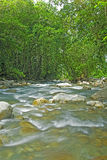 River Running Thru the Jungle In Costa Rica Stock Photography