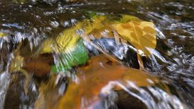 River with running water. Yellow leaf in the stream of water, the river. Forest creek, river with running water. Water flow of a mountain river stock video