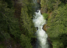 A River Runs Through It. Birds eye view of a river running through a forest in West BC Stock Images