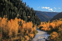 River runs through aspen and pine forest stock photography