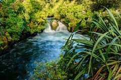 New Zealand forest landscape. Waterfall pouring into lake. A river runs through native forest and cascades into a deep blue lake. Okere Falls, near Rotorua, New stock photo