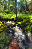 River runs over boulders in the forest. River runs over boulders in the primeval forest Royalty Free Stock Photo