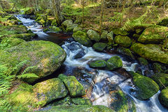 River runs over boulders in the forest Stock Photo