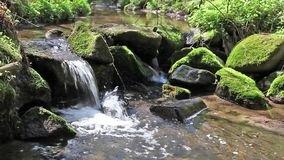 River runs over boulders in the primeval forest stock footage