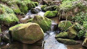 River runs over boulders in the primeval forest stock video footage
