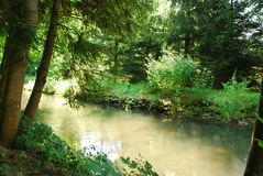 The river runs thru the forest. A small river runs its course through a forest Royalty Free Stock Images