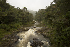 River rushing out of a lush jungle Royalty Free Stock Photography