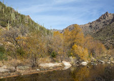 River in Sabino Canyon. Trees reflect in a river in Tucson's Sabino Canyon Stock Photography