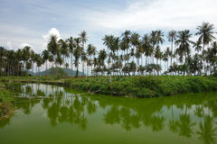 River. On the Samui island, Thailand Royalty Free Stock Photo