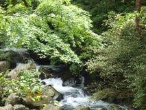 River scene Stock Image