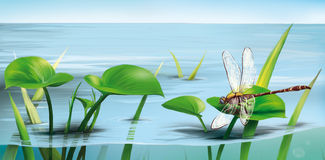 River scene: dragonfly on water grass, lake water. Illustration stock illustration