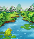 River scene with frog on leaf Royalty Free Stock Image