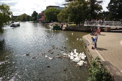 River scene at stratford on avon england. Scene of river at stratford on avon people at leisure and feeding swans Royalty Free Stock Photography