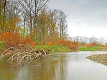 River Schwechat Stock Image