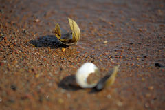 River seashells Royalty Free Stock Images