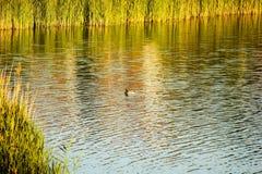 River See Lizenzfreie Stockbilder