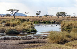 River in the serengeti Royalty Free Stock Images