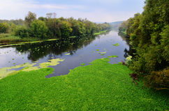 River Seversky Donets Royalty Free Stock Image