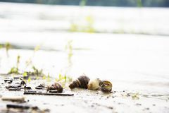 River shells on the beach Royalty Free Stock Photos
