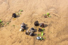 River shells on the shore Stock Images
