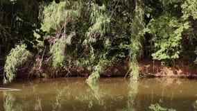 River Shore stock video