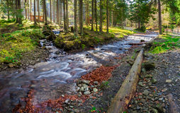 River shore in national park with late in autumn. Rocky shore of the wild river in coniferous forest of national park with few bowers late in autumn Stock Photography
