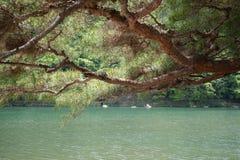 River shore. Pebble shore of Katsura river in Arashiyama, Japan Stock Image