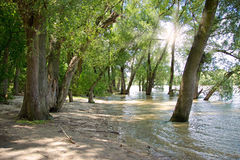 River Shore with Trees Royalty Free Stock Photos