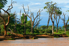 River side. River Flood. Africa. Kenya. Samburu national park stock photography