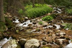 River. Small mountain river inside in the forest Stock Photo