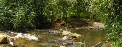 River. Small river with stones, green foliage, some stems and a stone road in the background royalty free stock image