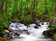 River in the Smoky Mountains Stock Image