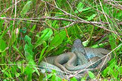 A snake in the mountains stock images