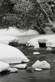 River Beside Snow Coated Tree Royalty Free Stock Photo