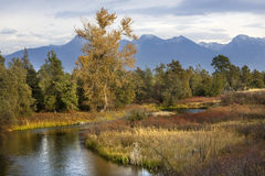 River Snow Mountains Fall Colors Montana Royalty Free Stock Images