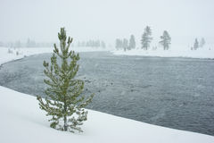 River in a snowstorm in yellowstone Royalty Free Stock Images