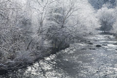 River, Snowy Landscape, Sevier County. Backlit Trees along a River, Snowy Landscape, Sevier County, Tennessee stock photo