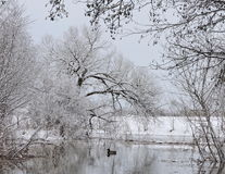 River and snowy trees, Lithuania Royalty Free Stock Image
