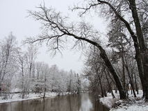 River and snowy trees, Lithuania Stock Images