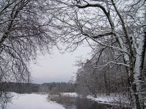 River Sysa and snowy trees in winter, Lithuania Royalty Free Stock Photos