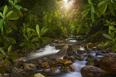 Southeast Asian Jungle with river Royalty Free Stock Image