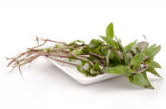 River spiderwort or small-leaf spiderwort. (Tradescantia fluminensis) Herb Hemp Thailand. Stock Images