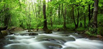 River in spring forest. An image of a river in green forest Royalty Free Stock Images