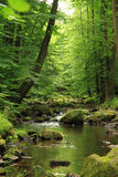 River in the spring forest Stock Images