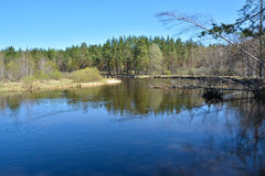 River in spring forest. Royalty Free Stock Photography